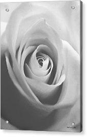 Classic Bw Rose Acrylic Print