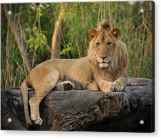 Classic Young Male Acrylic Print