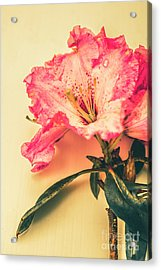 Classical Pastel Flower Clipping Acrylic Print