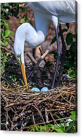 Cleaning House Acrylic Print