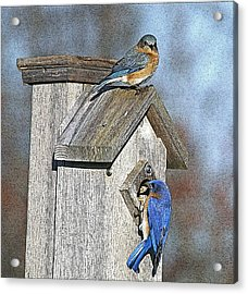 Cleaning House Acrylic Print by Robert Pearson