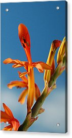 Clear Orange Acrylic Print by Jean Booth