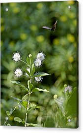 Cleared For Landing Acrylic Print by Charlie Osborn