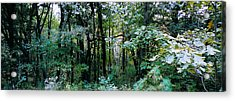 Clearing Glimpsed 1 Acrylic Print by Tom Hefko