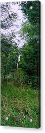 Clearing Glimpsed 7 Acrylic Print by Tom Hefko