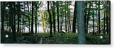 Clearing Glimpsed 9 Acrylic Print by Tom Hefko