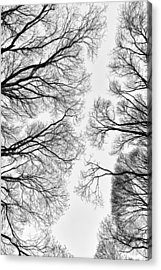 Clearings Acrylic Print by Matti Ollikainen