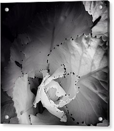Clearly Bloomed Acrylic Print