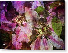 Clematis 9569 Idp_2 Acrylic Print