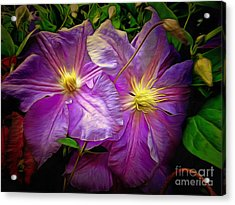 Clematis Azure Pearl Acrylic Print by Dorothy Berry-Lound