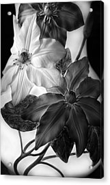 Clematis Overlay Acrylic Print