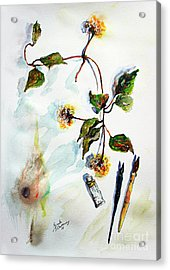 Clematis Seed Pods Still Life And Objects Acrylic Print