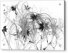 Clematis Seeds Acrylic Print