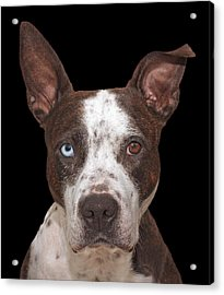 Cleo  Acrylic Print by Brian Cross