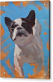 Cleo The French Bull Dog Acrylic Print