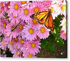 Cliff House Butterflies Acrylic Print by Heather Weikel