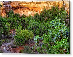 Cliff Palace At Mesa Verde National Park - Colorado Acrylic Print by Jason Politte