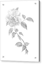 Acrylic Print featuring the painting Climbing Rose II by Elizabeth Lock