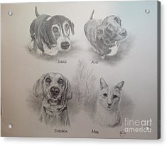 Cline Pets Acrylic Print by Mike Ivey