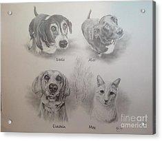 Cline Pets Acrylic Print