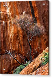 Clinging To Life Acrylic Print by Mike  Dawson