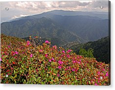 Clingman's Dome From Cliff Top Acrylic Print by Alan Lenk