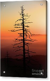 Acrylic Print featuring the photograph Clingman's Dome Sunrise by Douglas Stucky