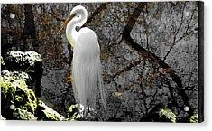 Cloaked Acrylic Print by Judy Wanamaker