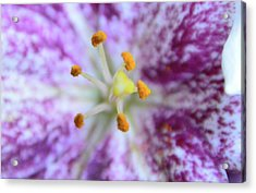 Close Up Flower Acrylic Print