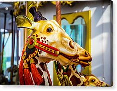 Close Up Giraffe Ride Acrylic Print