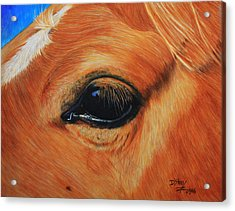 Close Up Of A Horse Acrylic Print by Don MacCarthy