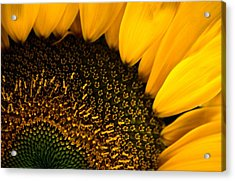 Close-up Of A Sunflower Acrylic Print by Todd Gipstein