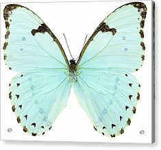 Close-up Of A White Butterfly Acrylic Print by Stockbyte