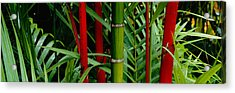Close-up Of Bamboo Trees, Hawaii, Usa Acrylic Print