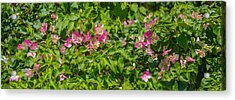 Close-up Of Flowers, Venice, Florida Acrylic Print by Panoramic Images