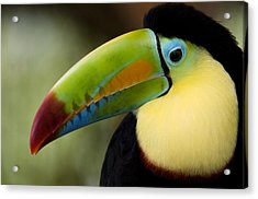 Close-up Of Keel-billed Toucan Acrylic Print by Panoramic Images
