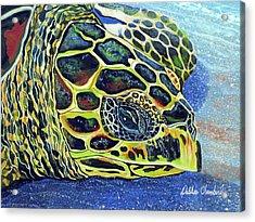 Close Up Of Kohilo Acrylic Print