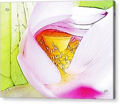 Close Up Of Pink Water Lily Acrylic Print by Lanjee Chee