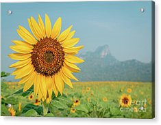 Close-up On Sunflower. Acrylic Print by Tosporn Preede