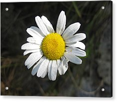 Close Up Sunflower Acrylic Print