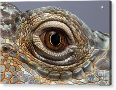 Closeup Eye Of Green Iguana Acrylic Print by Sergey Taran