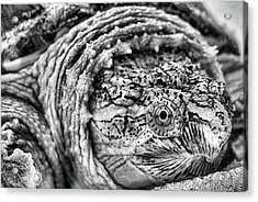 Closeup Of A Snapping Turtle Acrylic Print by JC Findley