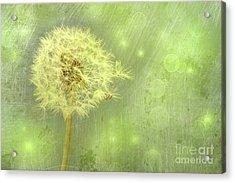 Closeup Of Dandelion With Seeds Acrylic Print by Sandra Cunningham