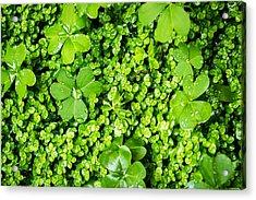 Lush Green Soothing Organic Sense Acrylic Print