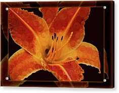 Closeup Wth A Vibrant Orange Lily Abstract Flower Acrylic Print by Omaste Witkowski