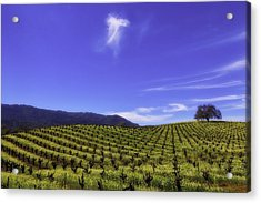 Cloud Above The Vineyards Acrylic Print