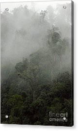 Cloud Forest Acrylic Print