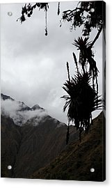Cloud Forest Musings Acrylic Print