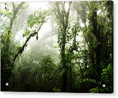 Cloud Forest Acrylic Print by Nicklas Gustafsson