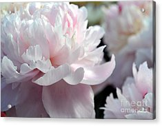 Cloud Of Peonies-47 Acrylic Print by Eva Thomas